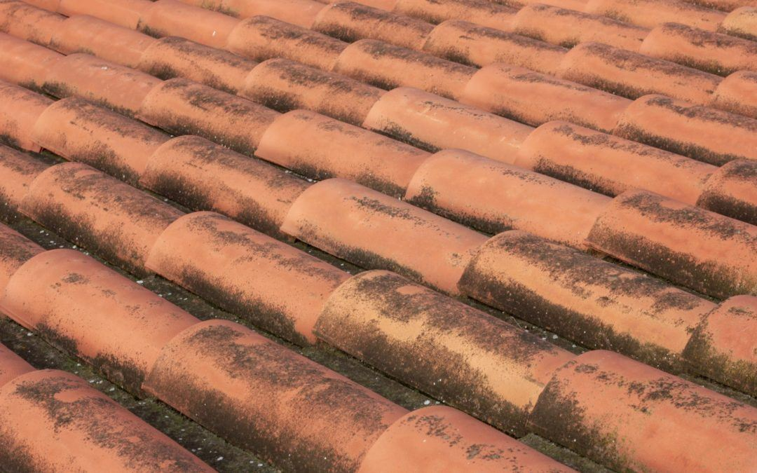 4 Tips for Removing Mold From Your Roof