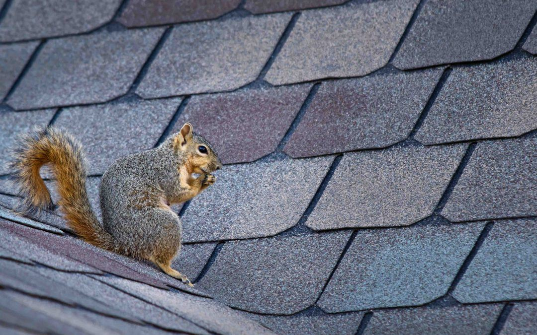 How to Keep Pests Out of Your Roof