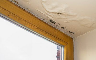 Signs of a Leaky Roof All Homeowners Should Know